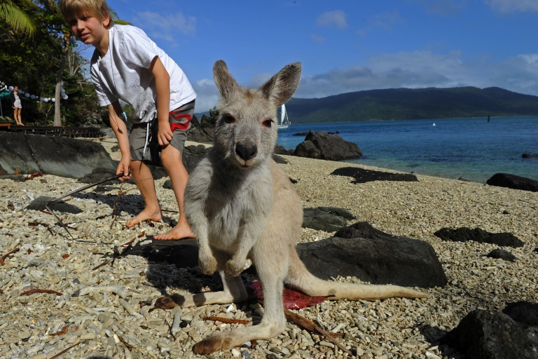<p>A rare albino kangaroo ... and friend... pictured at Lovers' Cove on Daydream Island in the Whitsundays archipelago off Queensland.</p>