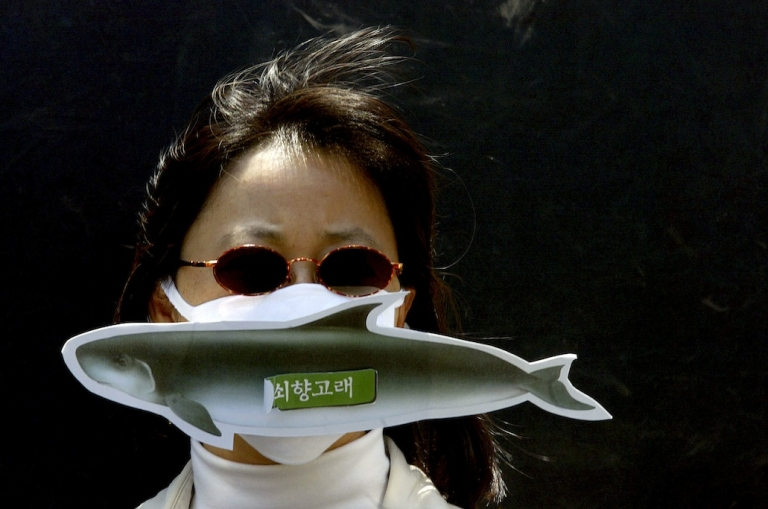 <p>A South Korean activist protests against Japan's whaling fleet killing minke whales. This week, South Korea opened up a new front in the global whale wars with a proposal to resume whaling in its coastal waters.</p>
