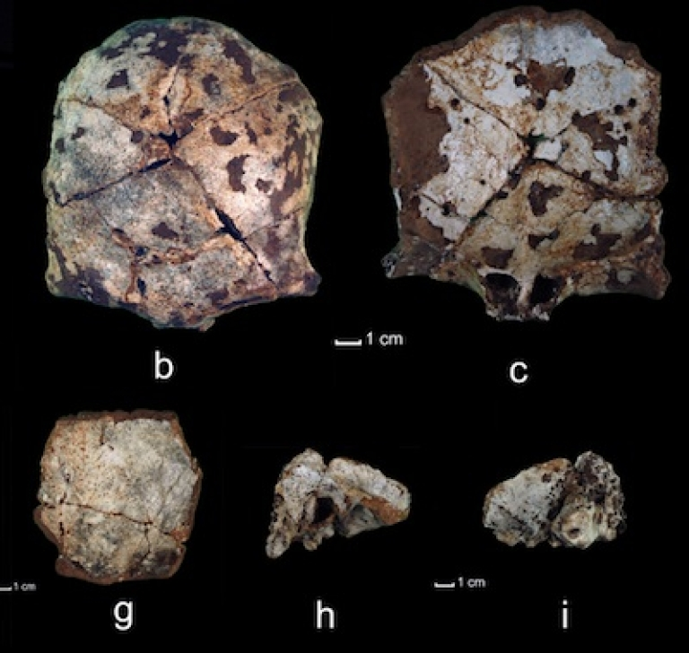 <p>A 63,000-year-old skull, discovered by University of Illinois researchers in Laos, offers some of the earliest evidence yet of ancient human migration through Southeast Asia.</p>