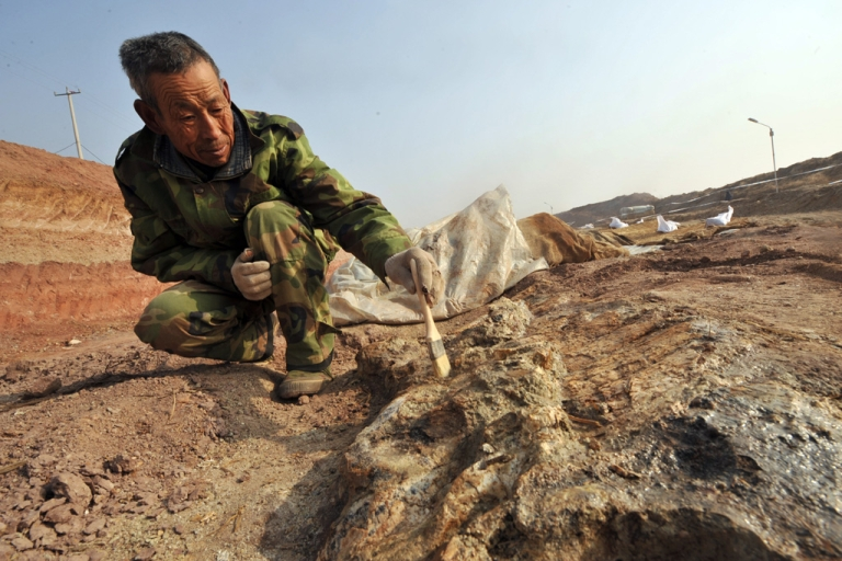 <p>This photo taken on Nov. 30, 2009 shows a Chinese archeologist uncovering dinosaur fossils at a site in Zhucheng, known as