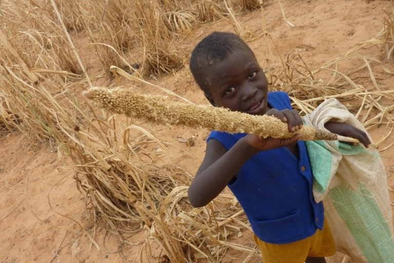 <p>A young boy from Niger holds a millet cob eaten by locusts. The Food and Agriculture Organization warns that Mali and Niger, already coping with severe food shortages, are threatened by an influx of locusts from Libya.</p>