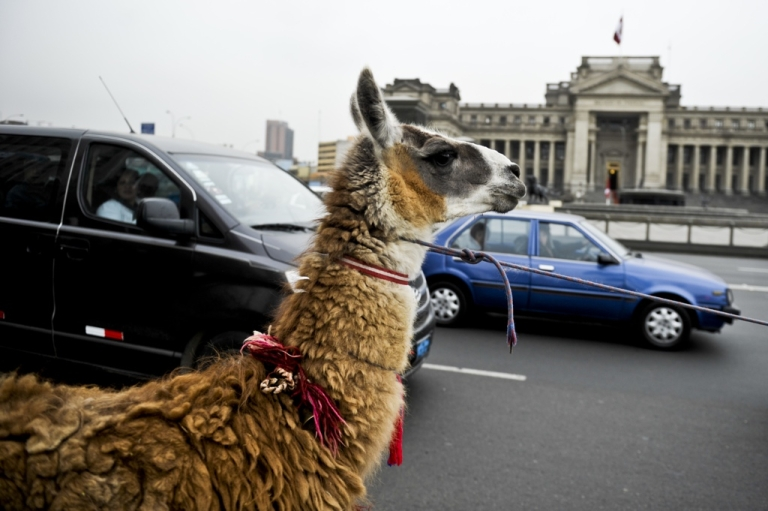 <p>The mayor of the Peruvian capital Lima is working hard to disentangle one of Latin America's most chaotic cities.</p>