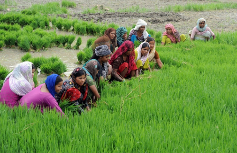 <p>Indian farmers sow a paddy  in a field in Gorakhpur, Uttar Pradesh on June 27, 2012. A good monsoon could give Prime Minister Manmohan Singh a much needed boost, as he takes over as finance minister. Unfortunately, the forecast is not promising.</p>