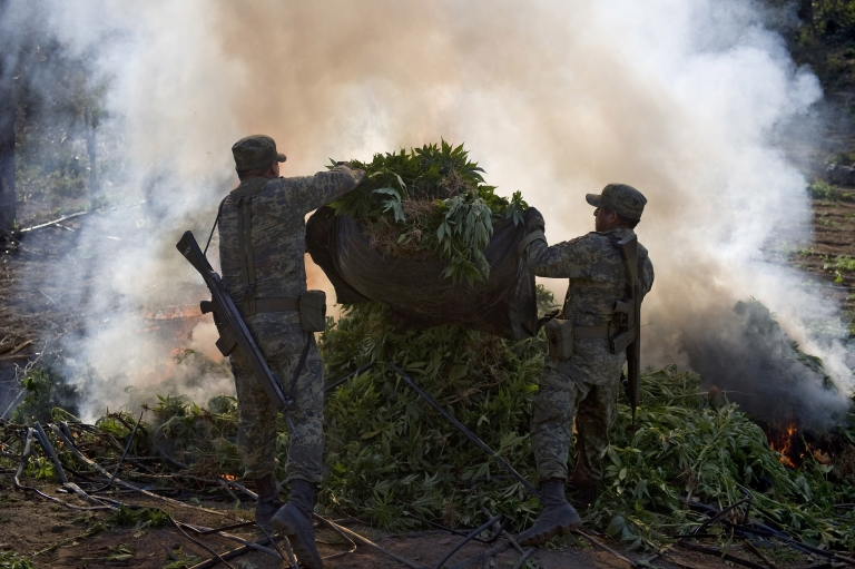 <p>Mexican soldiers burn marijuana plants today at a field, in Los Algodones community, Culiacan, Sinaloa state, Mexico. Soldiers found a marijuana field and incinerated the drug as part of the Culiacan-Navolato operation.</p>