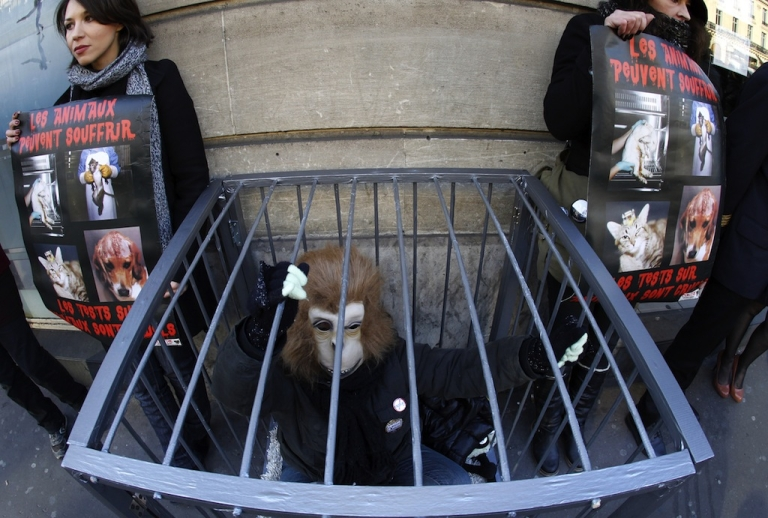 <p>An activist protesting against vivisection, dressed up as a monkey, demonstrates in a cage in front of an Air France KLM agency near the Opera Garnier to ask the airplane company to stop the transportation of laboratory animals used for experimentation, on February 4, 2012 in Paris. The European Union banned all cosmetic products tested on animals on March 11, 2013.</p>
