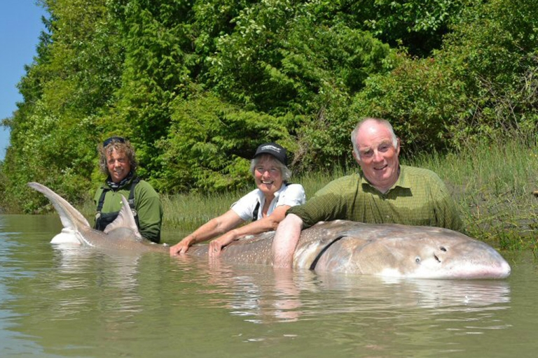 <p>Dean Werk, left, helps Margaret and Michael Snell hold a 12-foot-long white sturgeon on July 16, 2012, caught in the Fraser River near Chilliwack, British Columbia, Canada.</p>