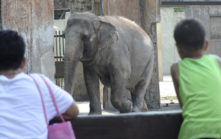 <p>Children flock around the enclosure of 37-year-old elephant Mali at the Manila Zoo on May 10, 2012. Rock icon Morrissey called on Philippine President Benigno Aquino on May 10, ahead of a Manila concert, to send what the star described as Manila Zoo's long-suffering elephant into retirement.</p>