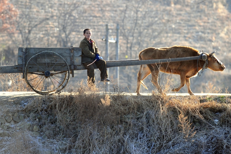 <p>A North Korean farmer sits on a cart pulled by a cow near the banks of the Yalu River, north of the North Korean border town of Siniuju which lies across the river from Dandong in northeast China's Liaoning province on Nov. 26, 2010.</p>
