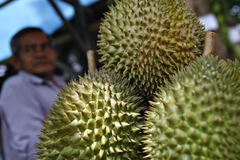 <p>Durian, a thorny tropical fruit with a distinctive pungent odor, sold at a roadside stall in Malaysia.</p>