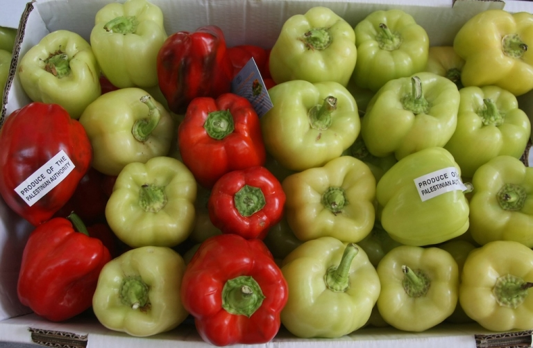 <p>Yellow and Red peppers produced in Palestinian territories are displayed with