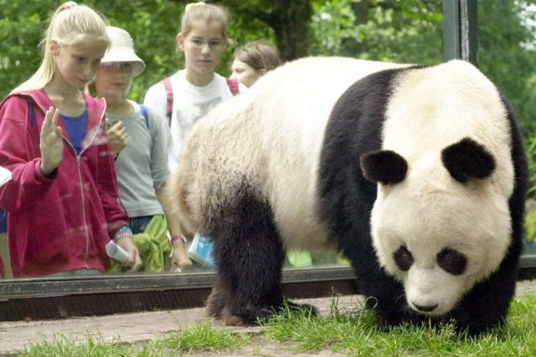 <p>Bao Bao, who was given to West Germany by China in 1980, was one of the world's oldest giant pandas.</p>