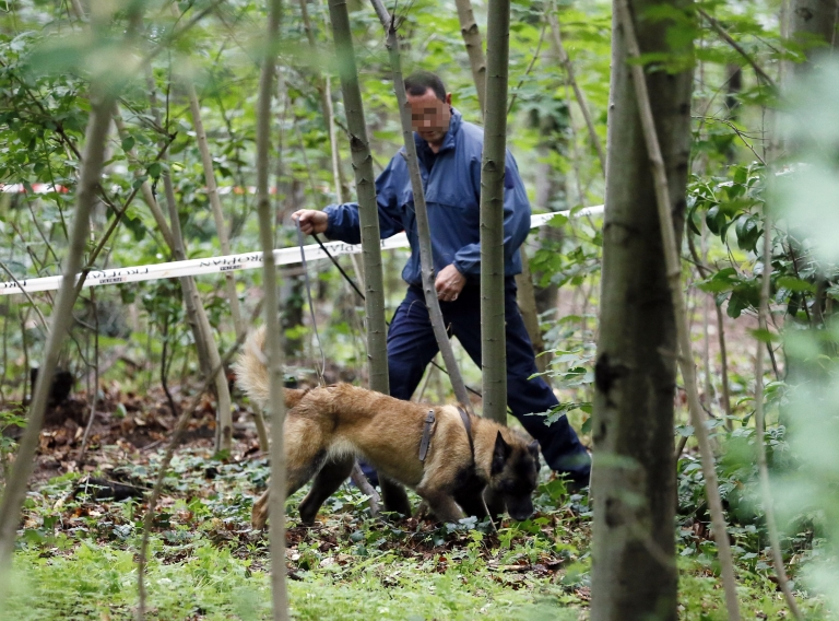 <p>A French policeman carries out investigations with a police dog at the Bois de Vincennes in Paris on June 18, 2012 after a second human torso was discovered in the woods.</p>