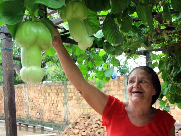 <p>Brazilian gardener Maria Rodrigues de Aguiar Farias, 53, shows off penis-shaped passion fruit growing in her backyard.</p>