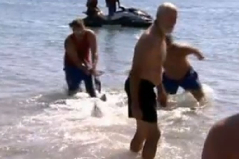 <p>Paul Marshallsea, a 62-year-old grandfather from Wales, drags a 6-foot dusky shark back into the water after it approached a beach along the Sunshine Coast in Australia recently.</p>