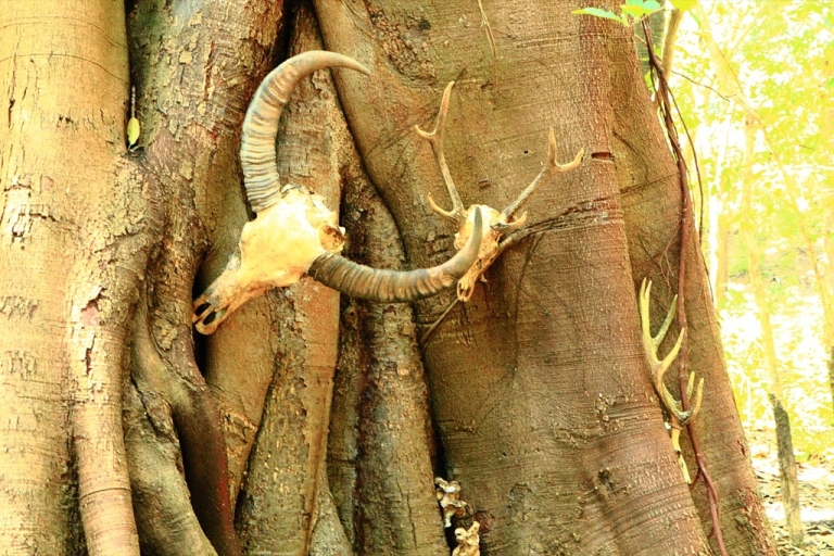 <p>Victims of the infamous Komodo dragon on the island of Rinca in Indonesia.</p>