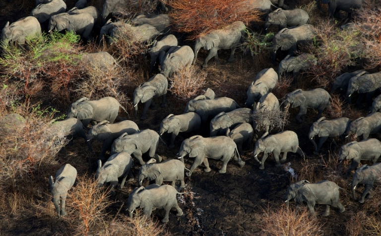 <p>An aerial picture taken on Avril 5, 2013 shows the main herd of elephants in Zakouma National Park.</p>