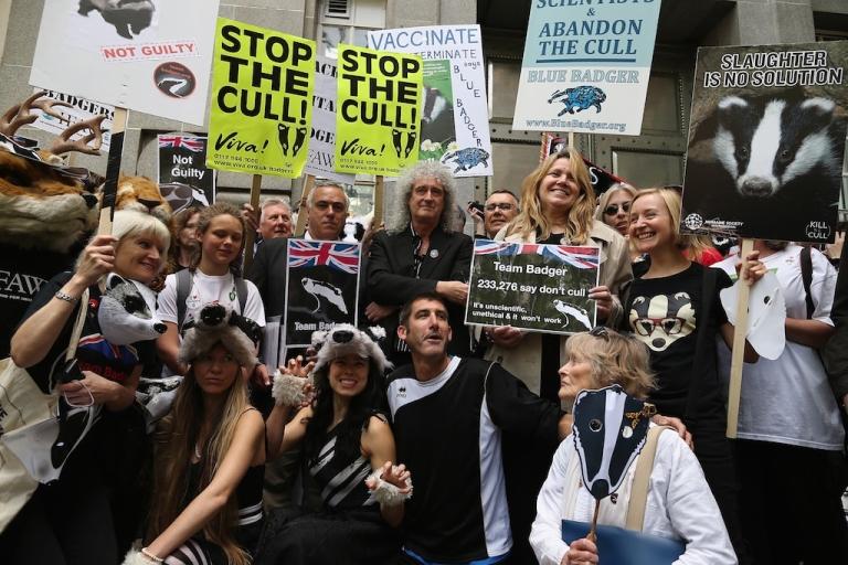 <p>A controversial badger cull has begun in England despite widespread opposition.</p>