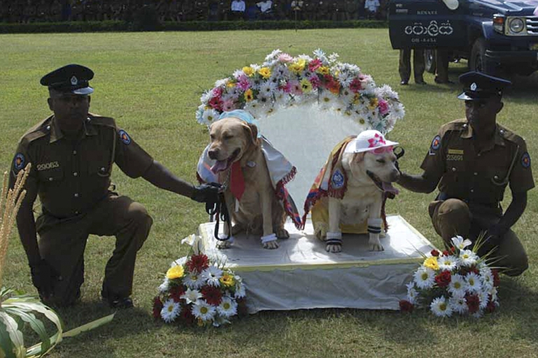 <p>Sri Lankan police pose with sniffer dogs at a