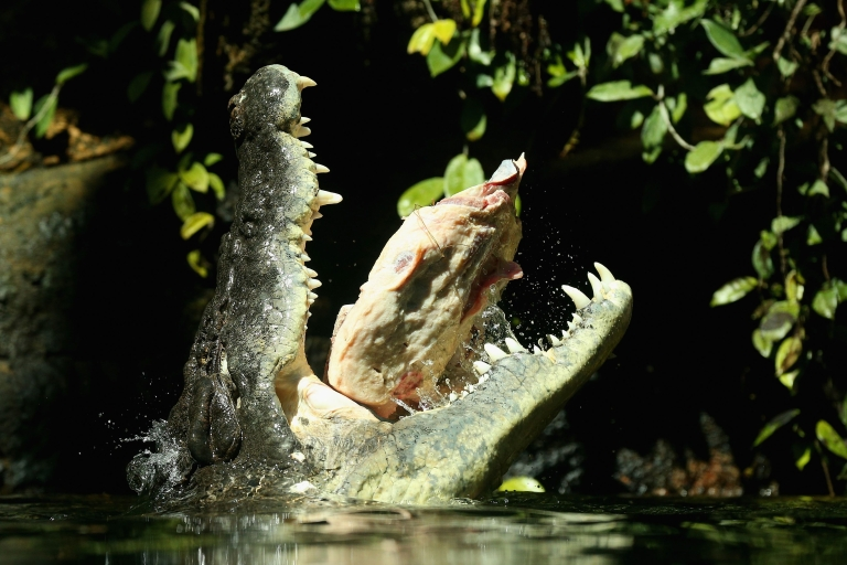 <p>Police were searching a northern Australia river for the body of a 24-year-old swimmer snatched by a crocodile during a birthday party along the banks of the Mary River on Aug. 24, 2013.</p>