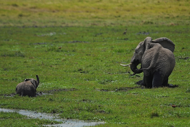 <p>An elephant and its calf graze at Amboseli National Park, southeast of Nairobi.</p>