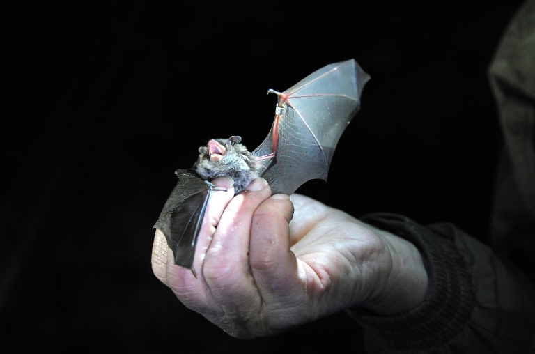 <p>Brown University researchers built a robotic bat wing to help them better understand how the animals fly.</p>