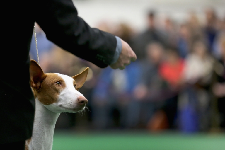 <p>A new study has shown that dogs actually understand us better than we thought.</p>