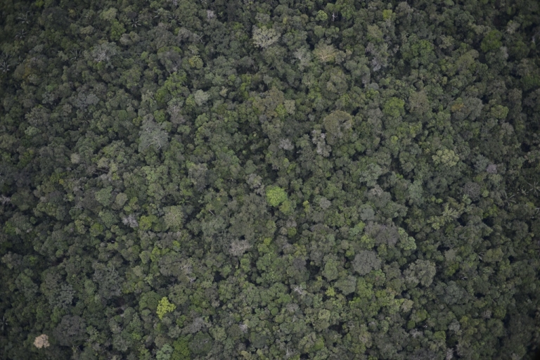 <p>The Amazon rain forest is nearly the same size as the Lower 48.</p>
