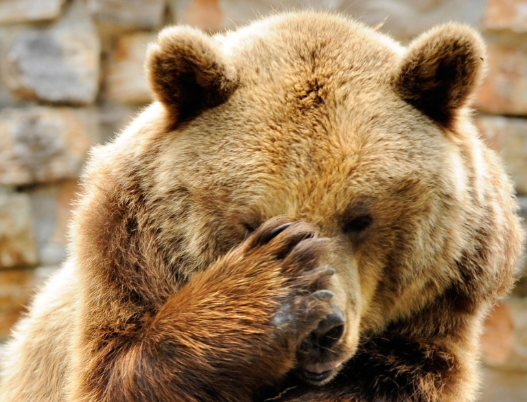 <p>Romanian gangster Nutzu the Pawnbroker had his pet bears and lions removed from his estate on Wednesday.</p>