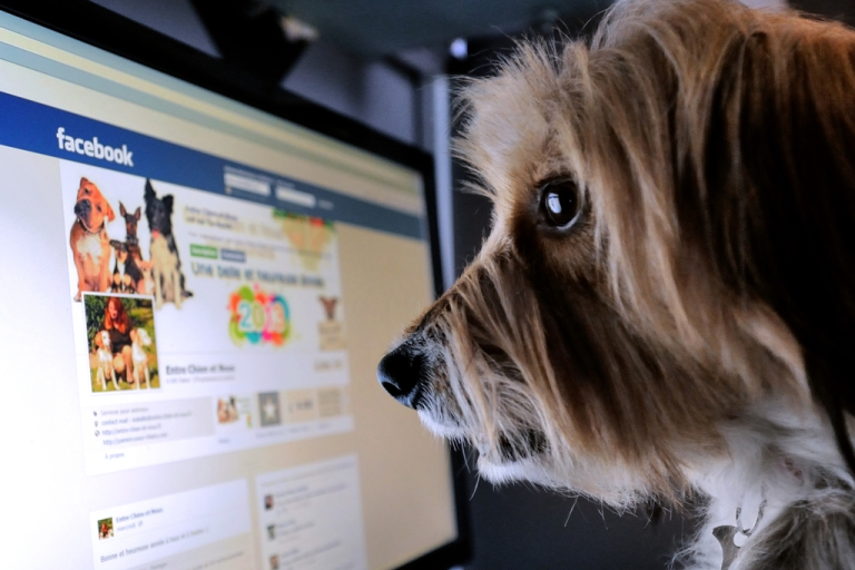 <p>Two-thirds of online adults in America use Facebook, but at least 61 percent of those users have taken voluntary breaks from Facebook, a study by Pew Research Center found.</p>