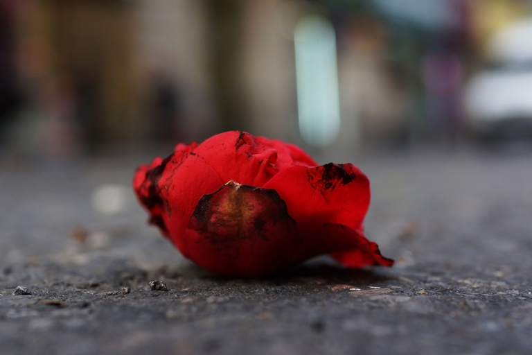<p>A discarded rose in New York City's floral district on Feb. 13, 2013.</p>