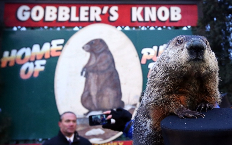 <p>Groundhog Punxsutawney Phil climbs on the top hat of his handler after Phil did not see his shadow and predicting an early spring during the 127th Groundhog Day Celebration at Gobbler's Knob on February 2, 2013 in Punxsutawney, Pennsylvania.</p>