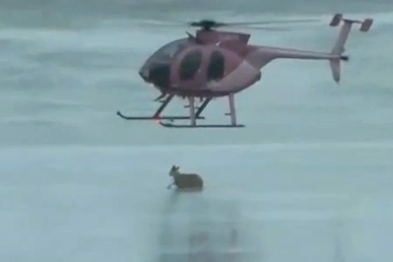 <p>Videographer Ian Waugh captured this video of helicopter pilot David Farrell rescuing a deer trapped on a frozen lake in Nova Scotia, Canada.</p>