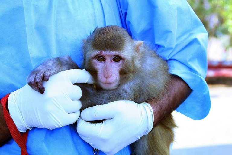 <p>An Iranian scientist holds a live monkey at an unknown location on January 28, 2013, which Iranian news agencies said returned alive after it traveled in a capsule to an altitude of 120 kilometres (75 miles) for a sub-orbital flight. Iran took a