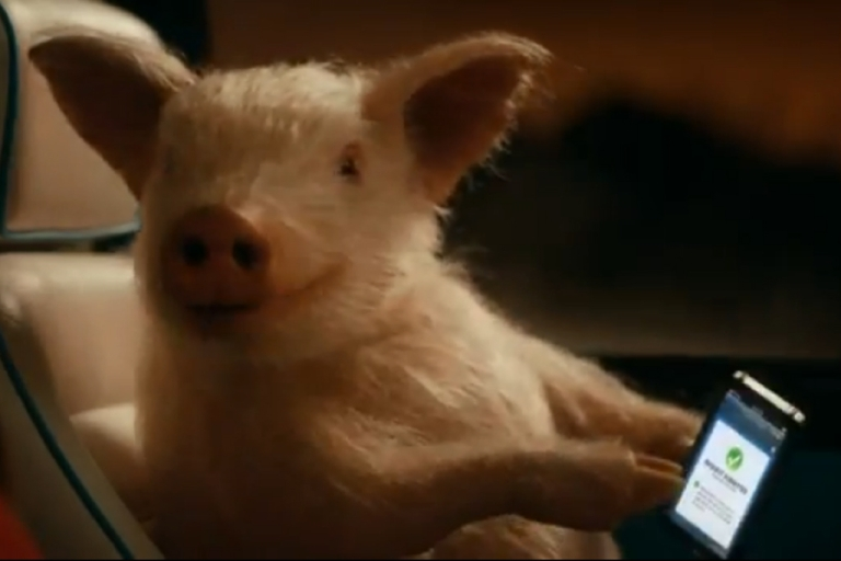 <p>A feral pig got drunk after ransacking an Australian campsite and proceeded to behave badly by picking a fight with a cow and swimming out into a river before passing out under a tree. This may seem like strangely human behavior but it did not, however, go on a date with a woman, like the Geico pig did (pictured above).</p>