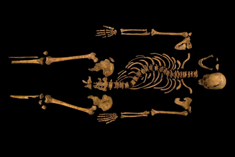<p>The skeleton identified as belonging to King Richard III, showing the deformity of his spine.</p>