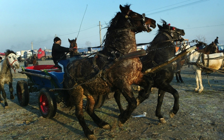 <p>A horse seller drives his chart at an animal fare in Rosiori de Vede, Romania on Dec. 15, 2006.</p>