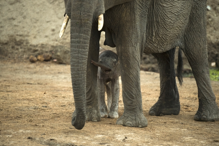 <p>An African elephant and her baby in Hwange National Park in Zimbabwe.</p>