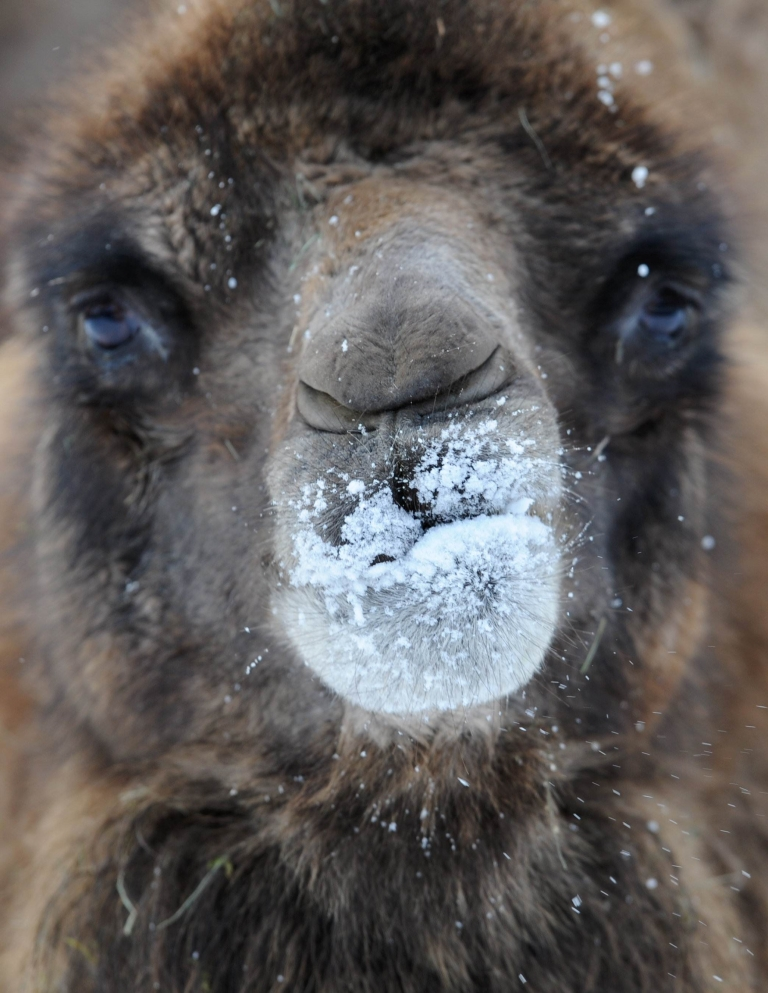 <p>A fire at a camel farm in southern Germany saw 86 of the humped beasts perish.</p>