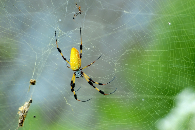 <p>Researchers at the University of Arizona used lasers to map the complex strands of spider silk to better understand why it is so strong.</p>