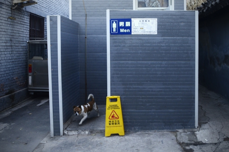 <p>Public restrooms for pets will soon grace some of China's streets.</p>