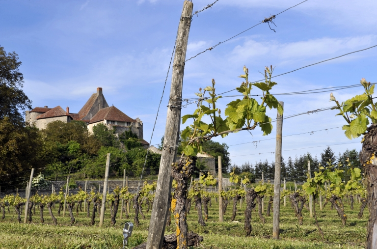 <p>Researchers have found that the origins of French wine may owe much to Italy after the discovery of Etruscan amphoras at the iron age site of Lattara in southern France.</p>