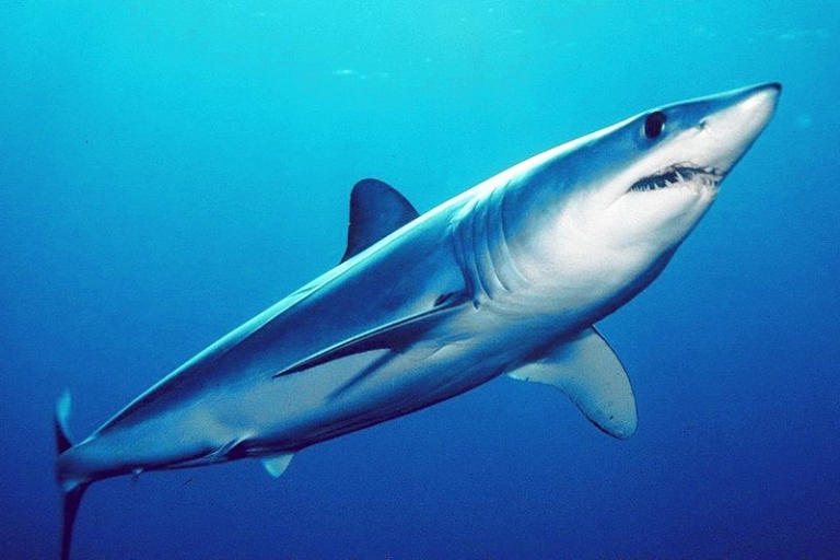 <p>A Texas man hooked a mako shark weighing over 1,300 pounds on June 3rd, a likely new record.</p>