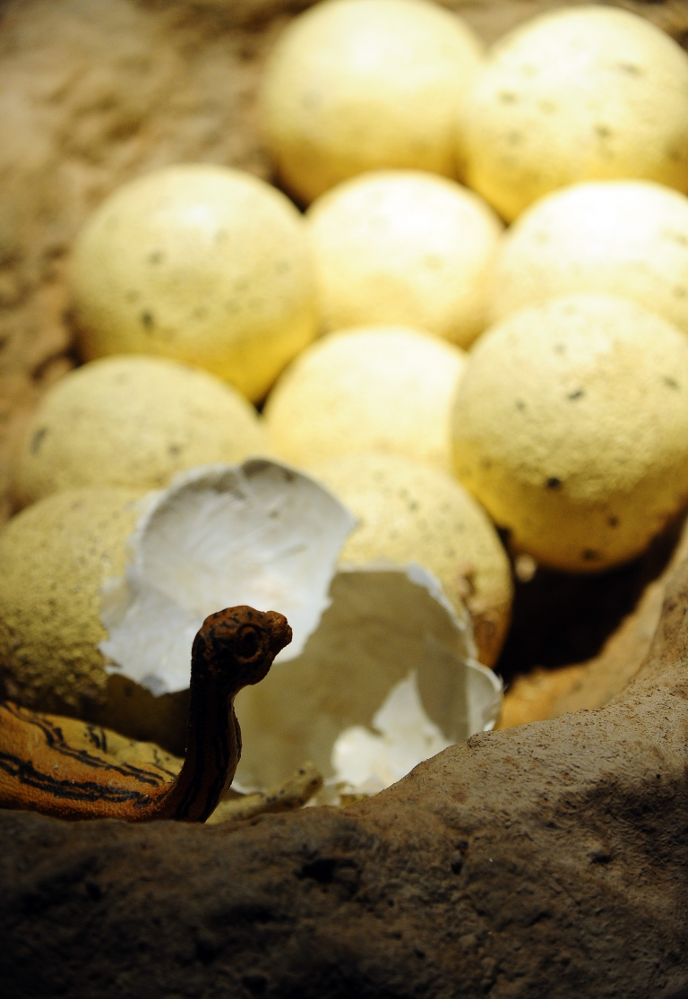 <p>Giant egg of an extinct Elephant bird is being put up for auction at Christie's. It is expected to fetch up to $45,000.</p>