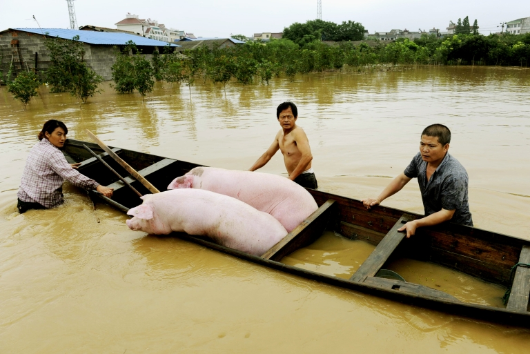 <p>900 pigs have been found dead floating down the Huangpu river near Shanghai. The river is used as drinking water by city residents.</p>