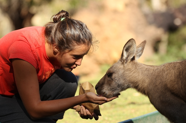<p>Laura Robson of Great Britain feeds a kangaroo on a visit to Bonorong Wildlife Sanctuary on January 5, 2013.</p>