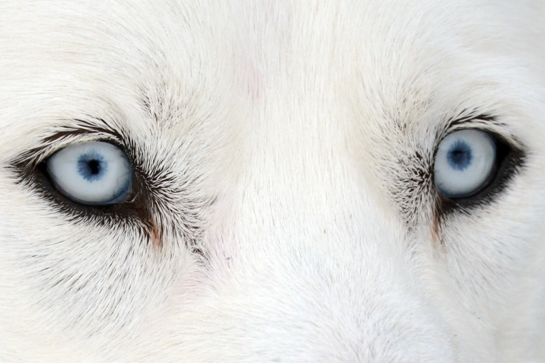 <p>The 2013 Iditarod Trail Sled Dog Race began at 10 am on 4th Avenue in downtown Anchorage on March 2. Sixty-seven racers from across the US, Canada, Russia, Norway, New Zealand—even Brazil and Jamaica—are entered into this year's event.</p>