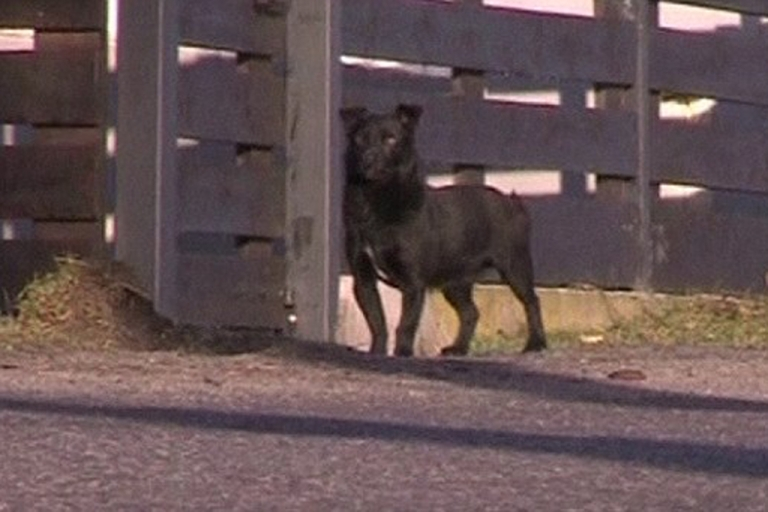 <p>This small black dog named Czarue is credited with saving the life of a 3-year-old girl who went missing in Poland, cuddling with her to keep her from freezing to death.</p>