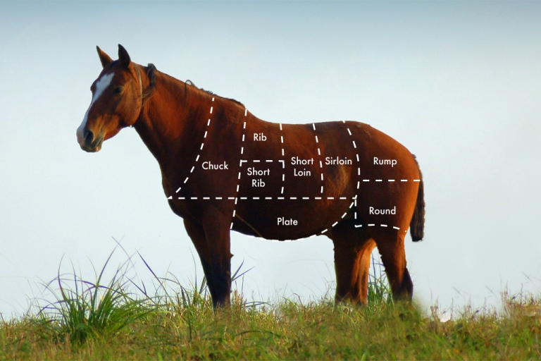 <p>What's the beef with horse?</p>