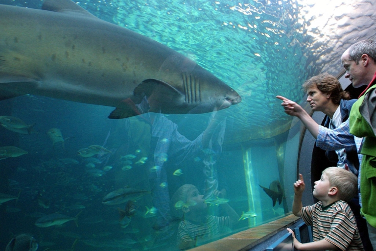 <p>Families watch as a ragged tooth shark swims at Two Oceans Aquarium in Cape Town, South Africa on April 29, 2001.</p>