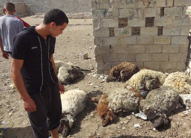 <p>An Iraqi looks at dead sheep killed in two roadside bombs that detonated in a livestock market in the northern city of Kirkuk, on May 21, 2013.</p>